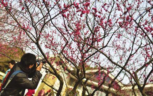 无锡春季完全赏花地图