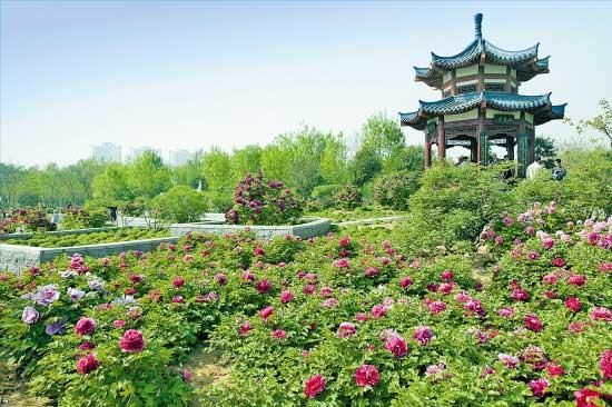 【中旅自组】开封、郭亮村、洛阳、西安双高一卧纯玩赏花六日游