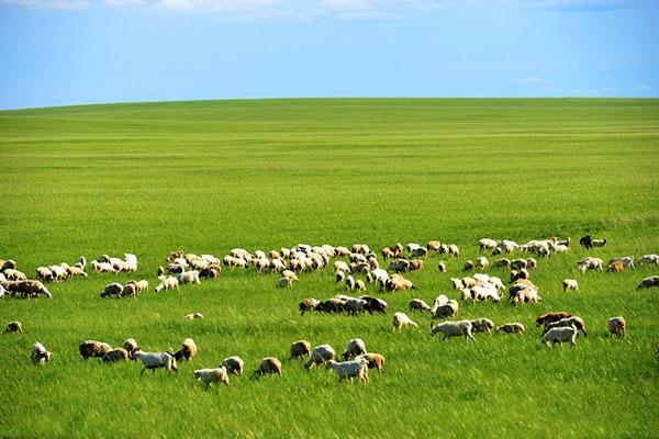 【中旅自组】呼伦贝尔大草原、莫尔道嘎原始森林、室韦、额尔古纳、满洲里、呼伦湖双飞六日游