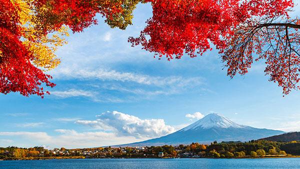 【中旅自组】日本本州赏枫半自由行六日体验