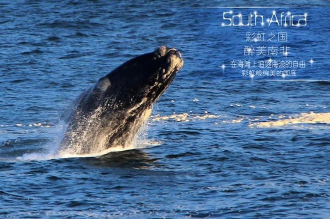 【中旅自组】新南非(太阳城+赫曼纽斯+花园大道)十天观鲸之旅