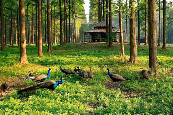 东台黄海国家森林公园、唐吉坷德之路、西溪夜景美丽乡村美食二日游