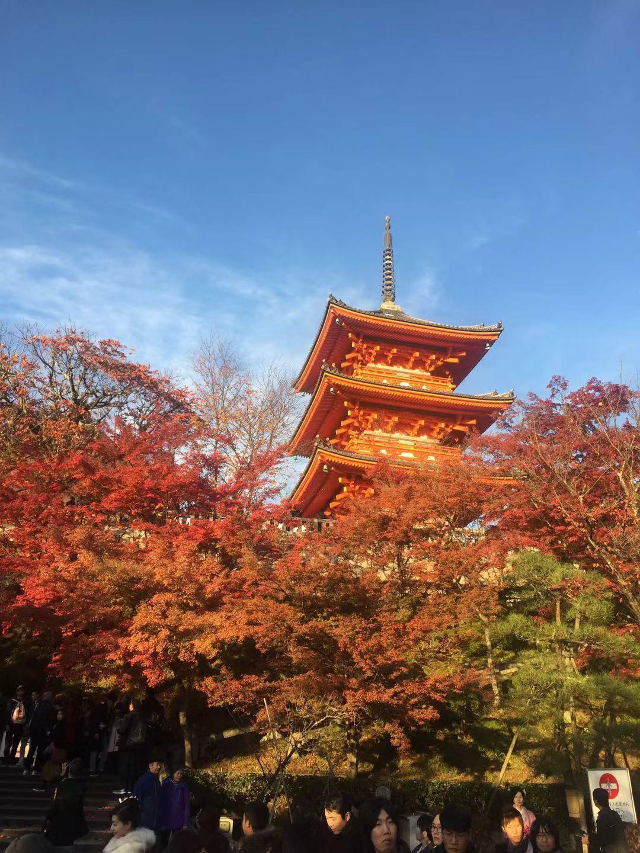 【中旅自组】日本本州大阪自由双古都 半自助6日(无锡口岸)